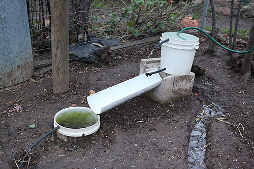 chicken water supply